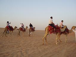 camel090226.jpg