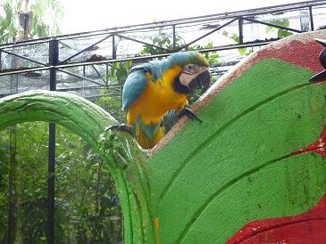 tropicalgarden20091023.jpg