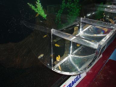 underwaterworldpattaya2009052407.jpg