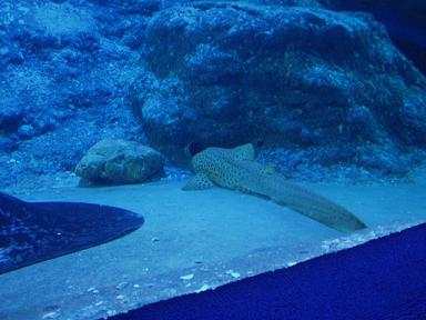 underwaterworldpattaya2009052408.jpg