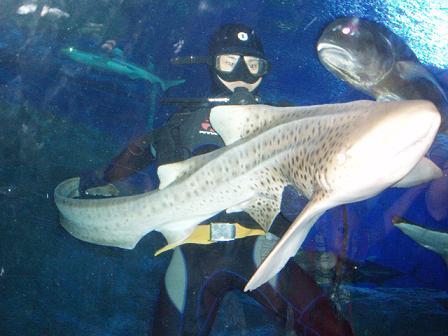 underwaterworldpattaya2009052409.jpg