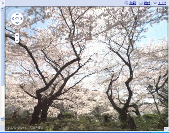 千鳥が淵 桜