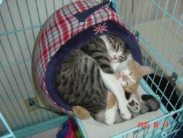 子猫時代03