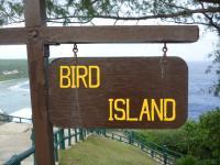 birdisland.jpg