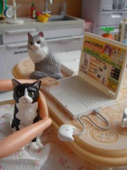 momoko  cats2