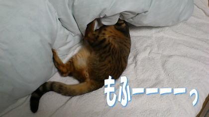 sasuke20111120-2.jpg