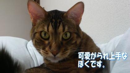 sasuke20111120-5.jpg