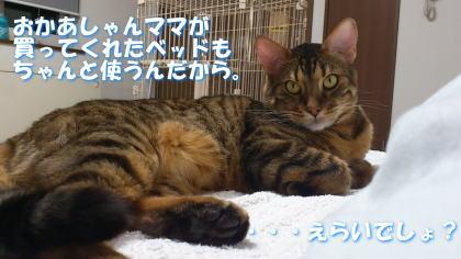 sasuke20111120-6.jpg