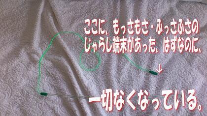 sasuke20111120-7.jpg