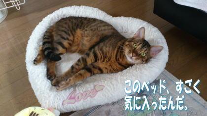 sasuke20111208-1.jpg