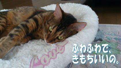 sasuke20111208-2.jpg