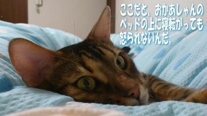 sasuke20111208-3.jpg