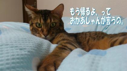 sasuke20111208-5.jpg