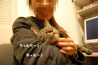 20081130kotetsu2.jpg