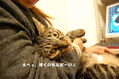 20081130kotetsu6.jpg