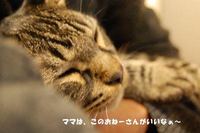 20081130kotetsu7.jpg