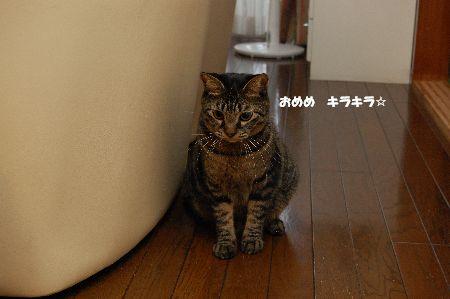 20091027kotetsu2.jpg