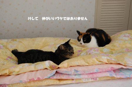 20091027mikankotetsu.jpg