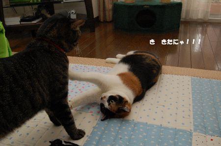 20091028mikankotetsu2.jpg