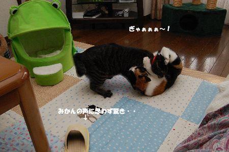 20091028mikankotetsu3.jpg