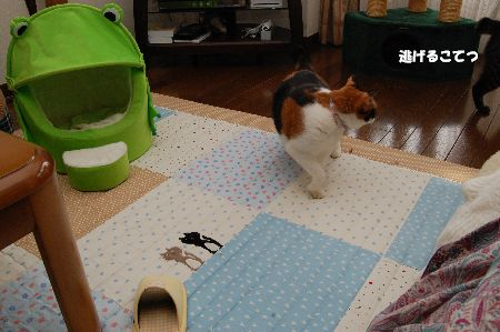 20091028mikankotetsu4.jpg