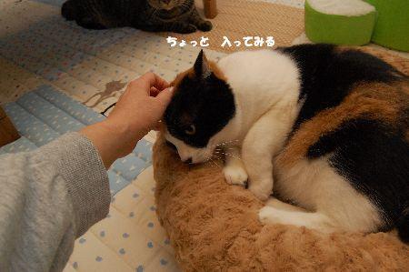 20091029mikan.jpg