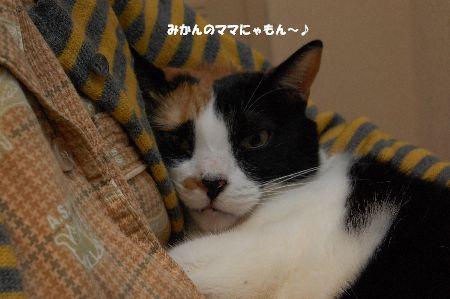 20091029mikan2.jpg
