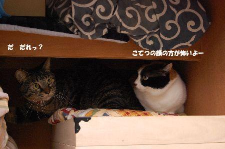 20091029mikankotetsu.jpg