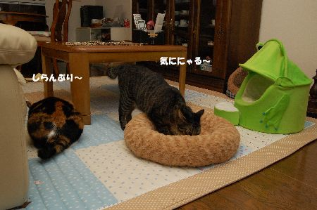 20091029mikankotetsu2.jpg