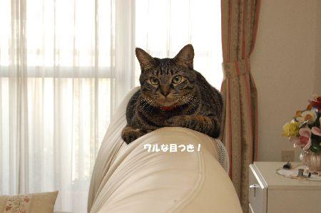20091105kotetsu3.jpg