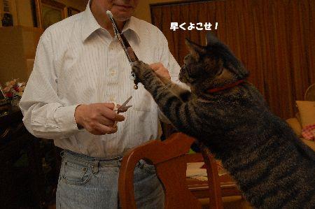 20091110kotetsu.jpg