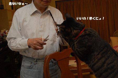 20091110kotetsu2.jpg