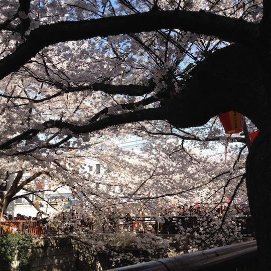 2012中目黒の桜