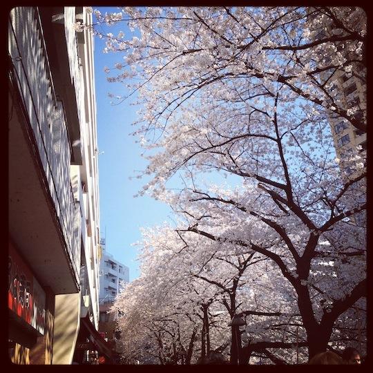 2012_2中目黒の桜