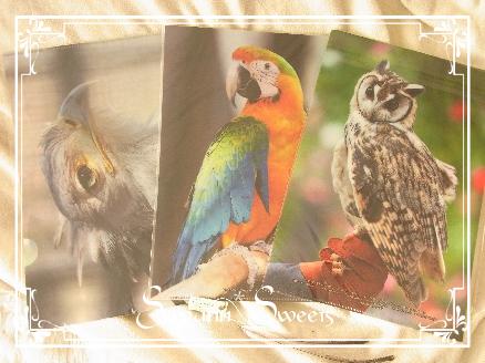 鳥ファイル