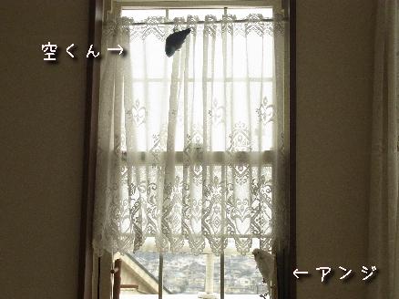 アンジと空