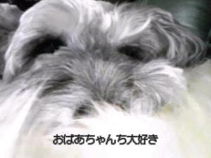 20081231001436