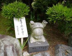 090614kikyou12.jpg