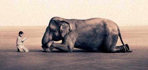 グレゴリー 象