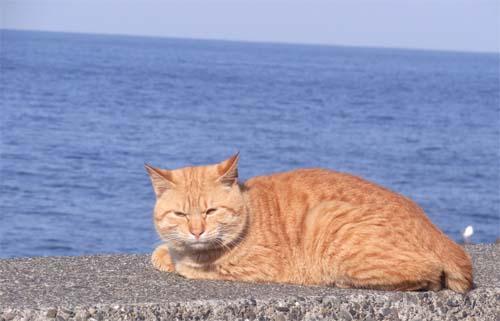 tyairo_cat.jpg
