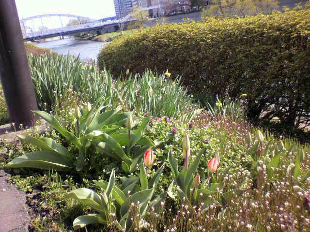 盛岡市開運の花壇