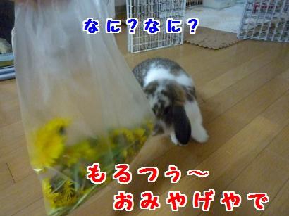 P1100928_convert_20120405163639.jpg