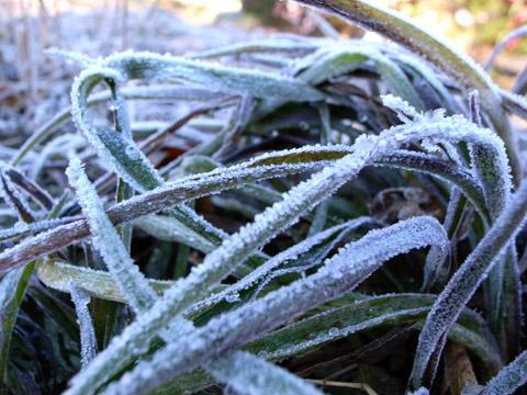 2008.12.15 寒い朝 001