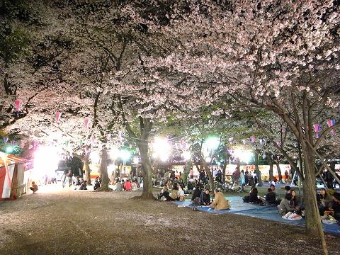 喜多院の夜桜 002.2