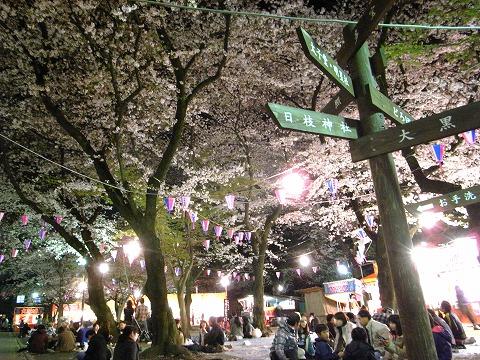 喜多院の夜桜 018.1
