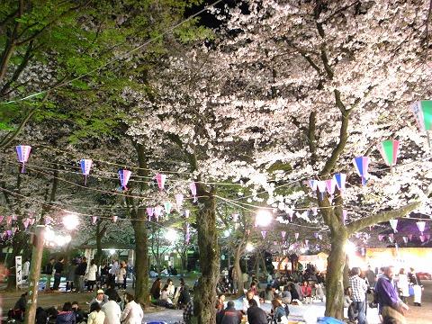 喜多院の夜桜 022