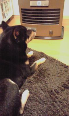 温まる犬2