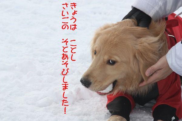 2011-12-31-011.jpg