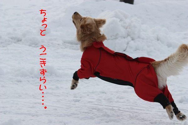 2011-12-31-014.jpg