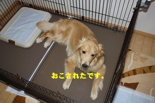 2011-12-22-ハチ-005